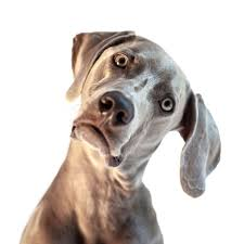 confused-dog-pic-jpg